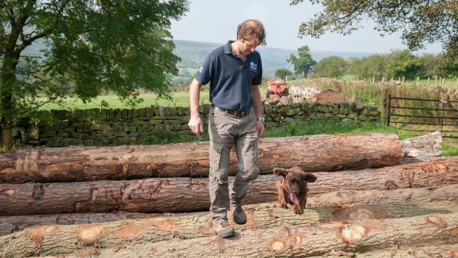 Henry at log stock